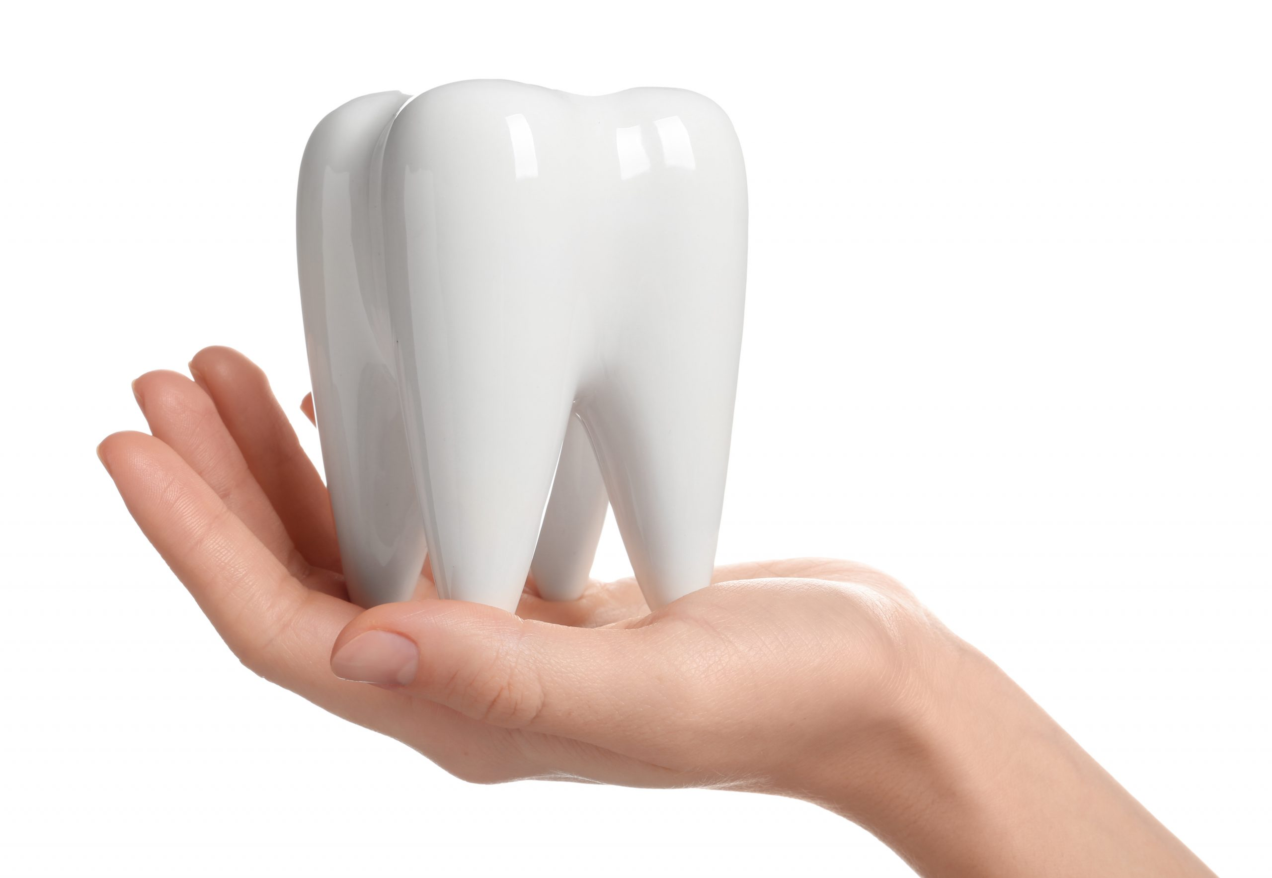 Woman holding ceramic model of tooth on white background